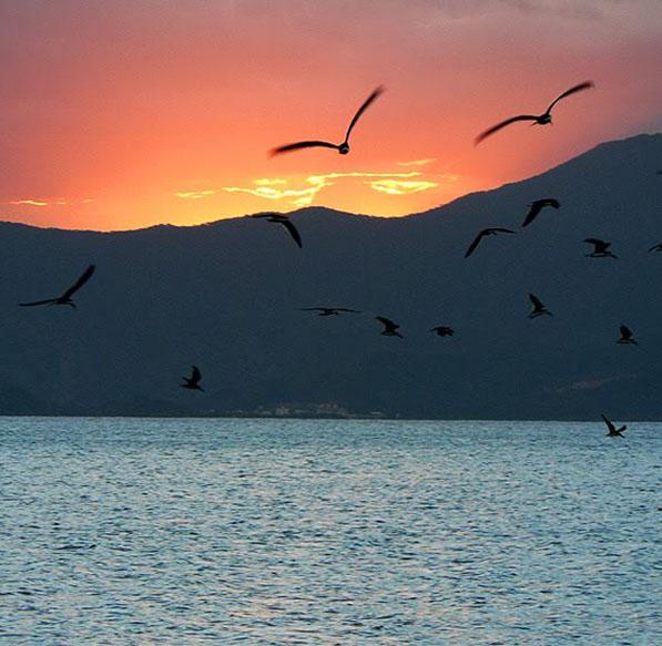 passarinhos voando